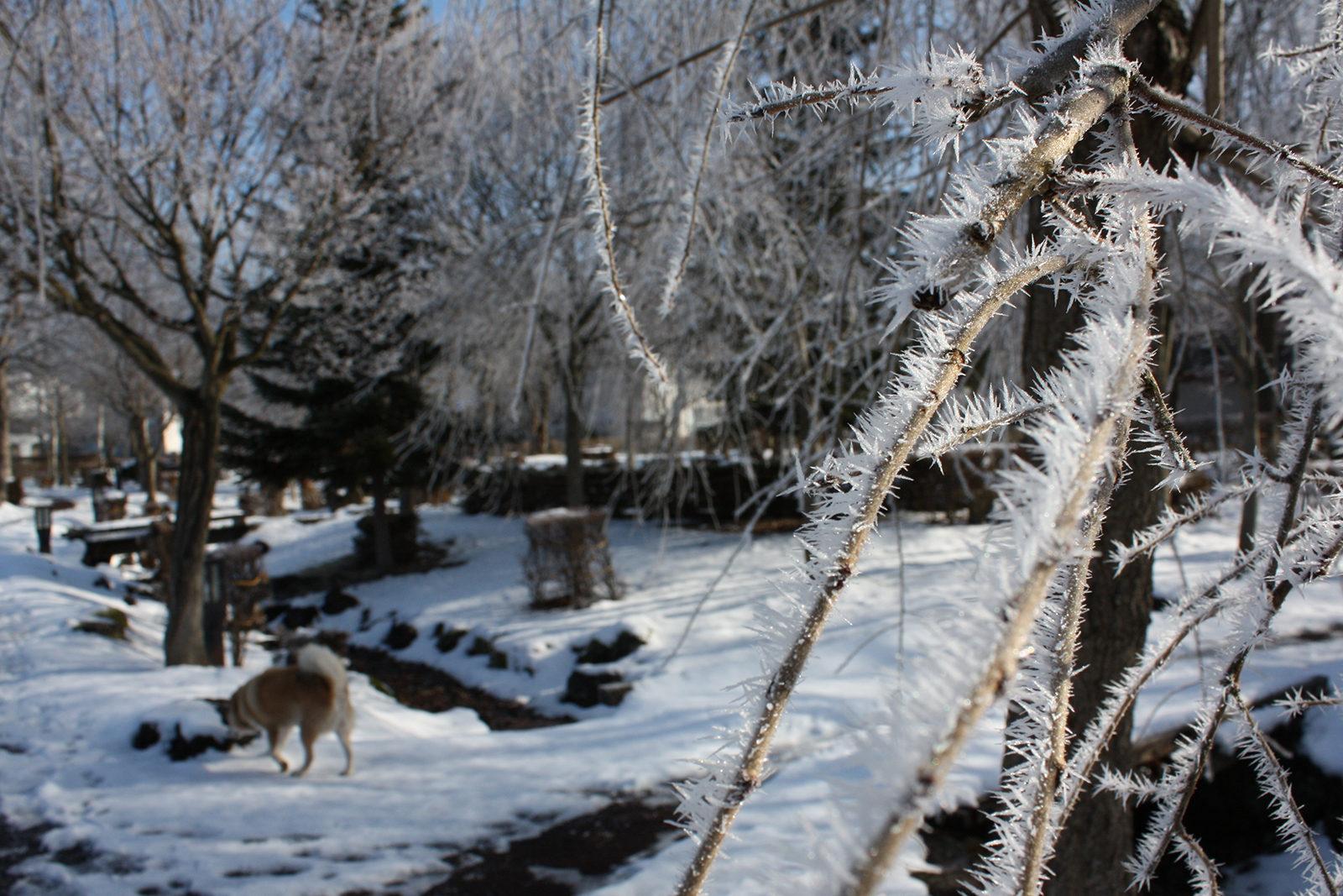 氷点下の公園の風景_16