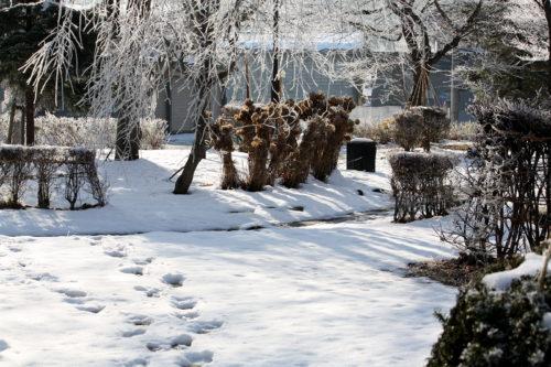 氷点下の公園の風景_19