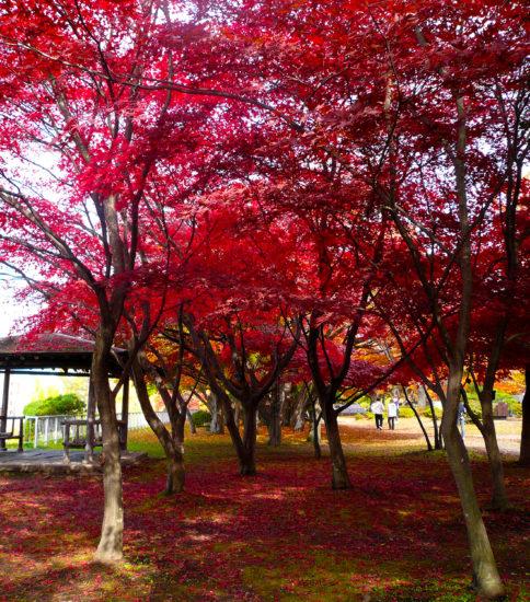 岩手公園の紅葉をアップしました。