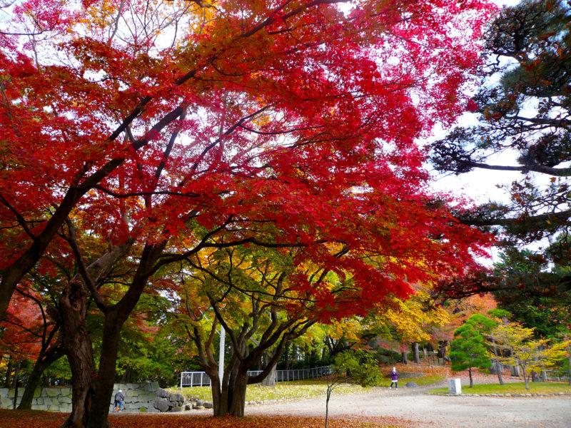 もみじと公園の風景